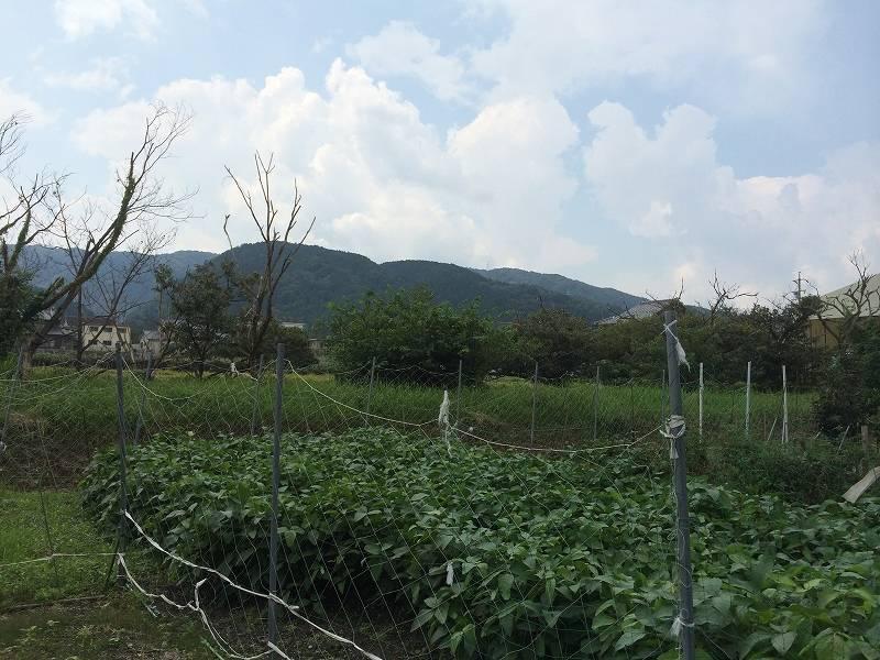 現地を北東側から撮影