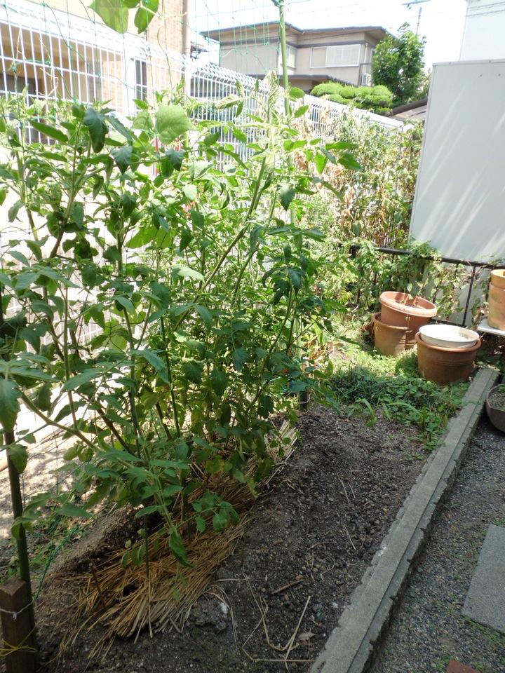 家庭菜園スペースあります!
