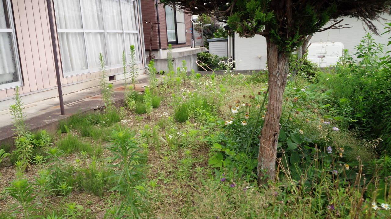 お庭が広めなので、お洗濯物も悠々干せます。