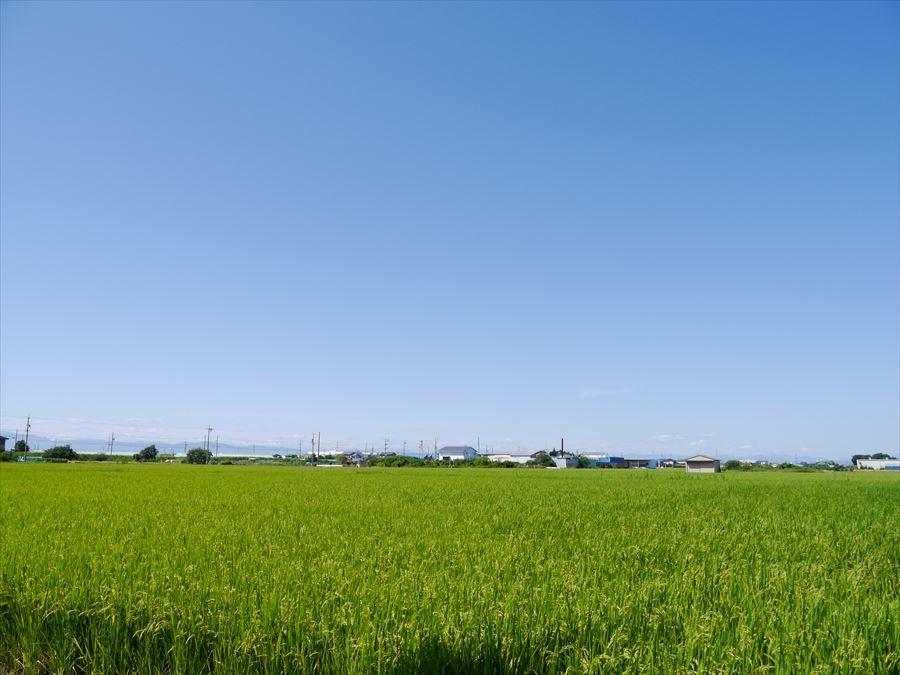 青空の下に広がる田園風景が遠くの方まで続き、風が吹くと揺れる稲の音が心地よく感じられます・・