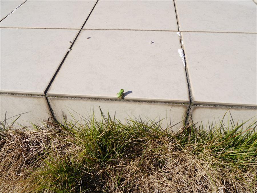 お庭のテラスにお客様。小さなカエルにも自然を感じます。