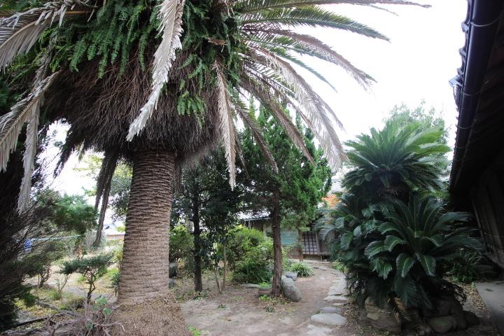 立派な木々が生い茂るお庭であなたの好きな植物を育ててみませんか