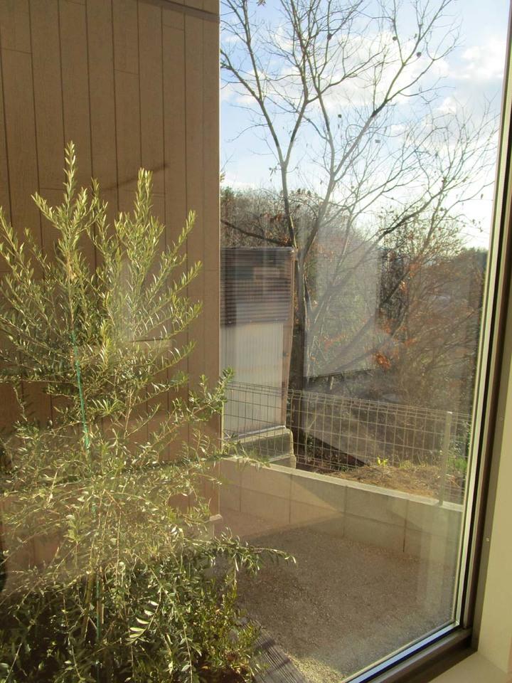 玄関入ってすぐ見える植木です